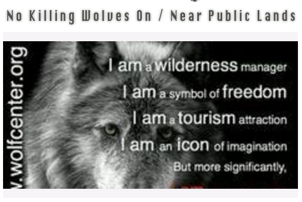 No killing wolves on or near public lands! Petition.